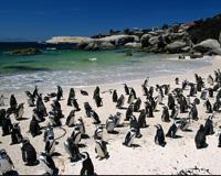 виза в ЮАР самостоятельно