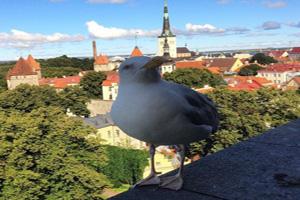 Страховка для поездки в Таллин
