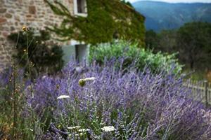 Страхование для поездки во Францию